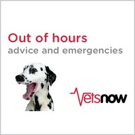 Barton Veterinary Centre VetsNow Afterhours care